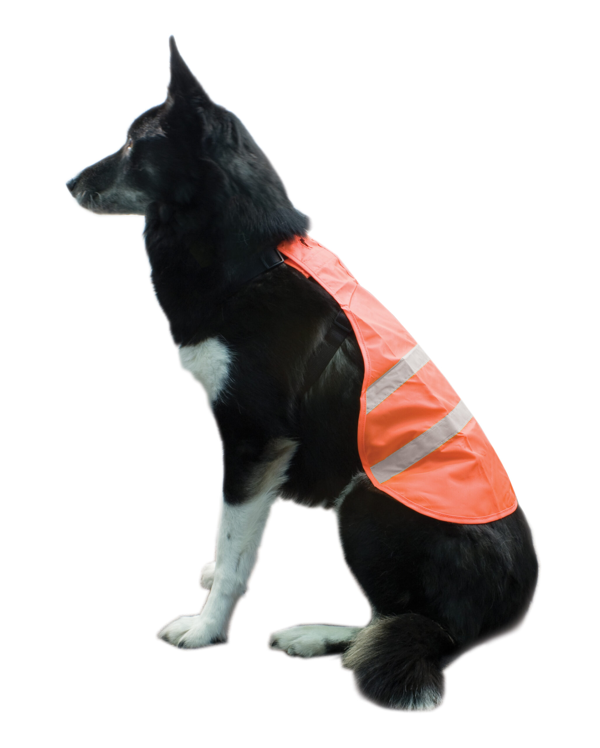 BACKWOODS 火焰橙狗狗安全背心