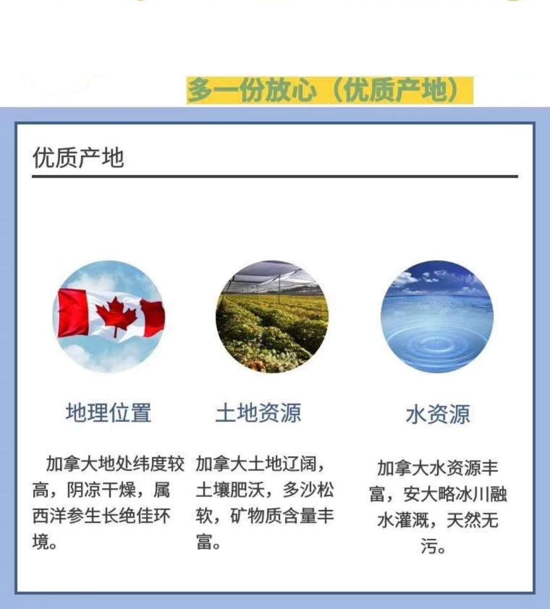 Product_奇妙_Wild Mountain野山牌加拿大安大略西洋参】圆粒 每颗10g左右 227g:盒 A-3_